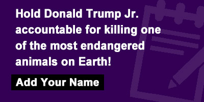 Hold Donald Trump Jr. accountable for killing one of the most endangered animals on Earth!